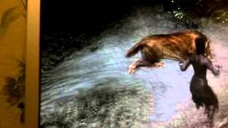видео прохождение игры скайрим №4