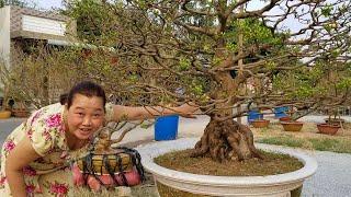 Những cây mai giá hàng trăm triệu ở chợ hoa Tết Miền Tây