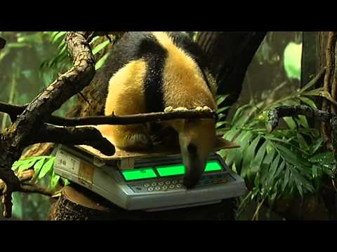London Zoo animals weigh-in for stock-take