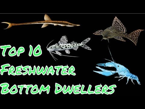 Top 10 Freshwater Bottom Dwellers