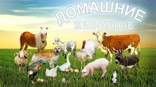 Домашние животные для детей, учим названия домашних животных, развивающее видео для детей