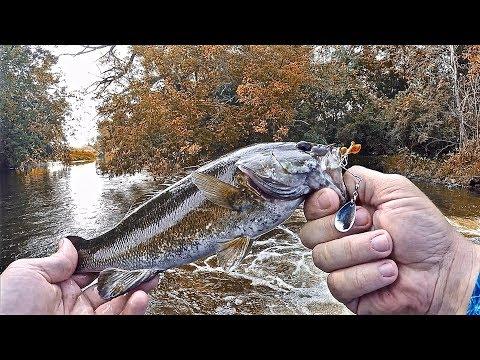 NEW Creek Smallmouth Bass Fishing Spots Found On GOOGLE MAPS!