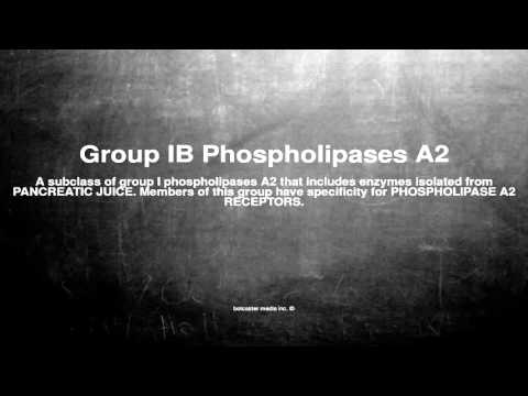 Medical vocabulary: What does Group IB Phospholipases A2 mean