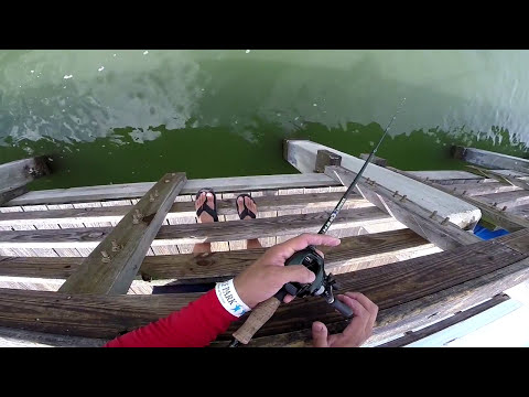 How to catch sheepshead from a pier gopro hero3 hd for Seawolf park fishing report