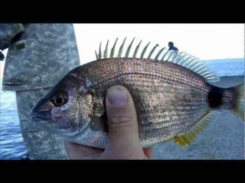 наживка для черноморской рыбы