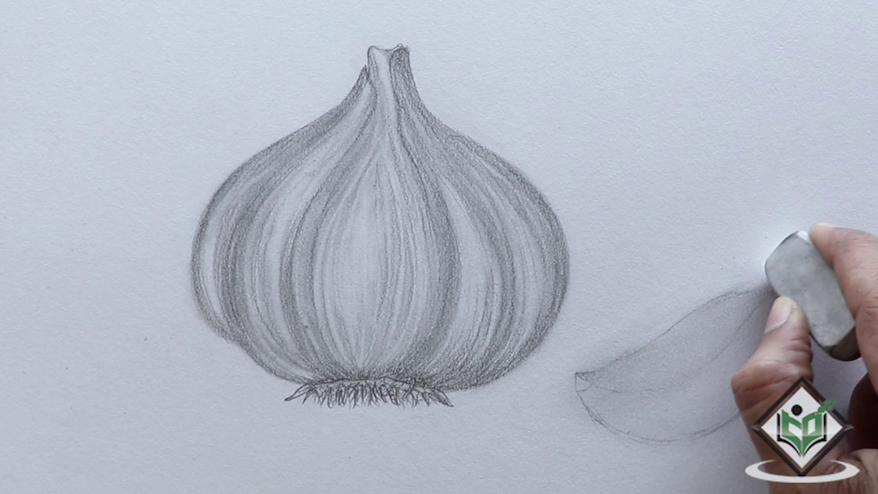 maxresdefault how to sketch a garlic youtube