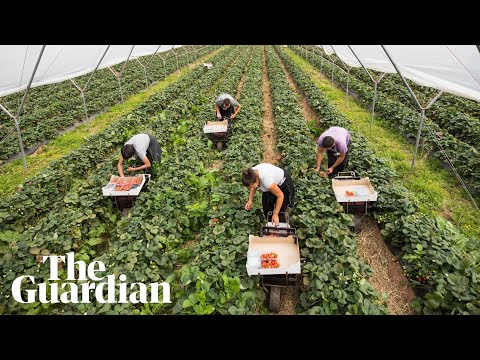 Environment secretary George Eustice calls on furloughed Britons to pick fruit