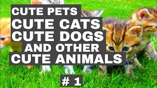 Cute pets, cute cats, cute dogs and other animals compilations #1
