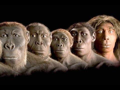 İnsanın evrimi - Türlerin Kökeni