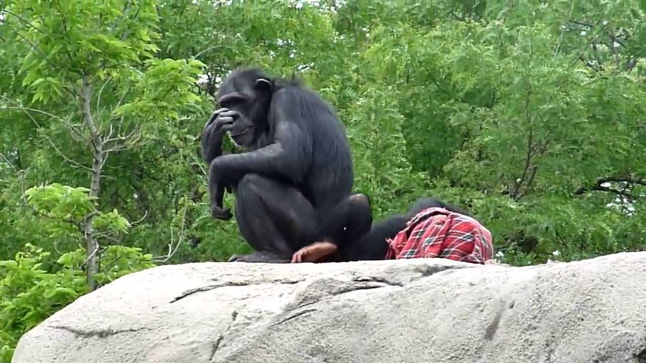 Spielen Affen