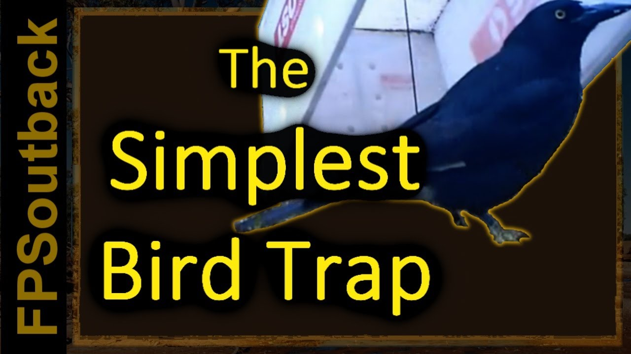The Simplest Bird Trap - YouTube