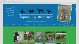 Seo Audit For A Dog Training Company Website In Raleigh Nc