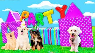 I THREW MY DOG A PUPPY PARTY!!