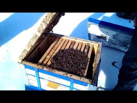 Зима на пасеке.  Winter in the apiary
