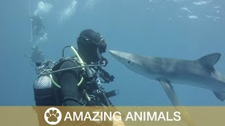 Diver Gets Kisses From Shark