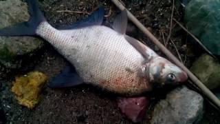Рыбалка на Рыбинском водохранилище. ЛЕЩ!!