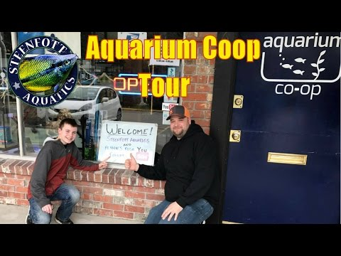 Aquarium Coop Store Tour With Flynns Fish Forum | Community Fish | Planted Tanks | Guppy Fish