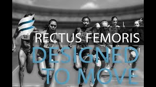 Designed to Move | Rectus Femoris