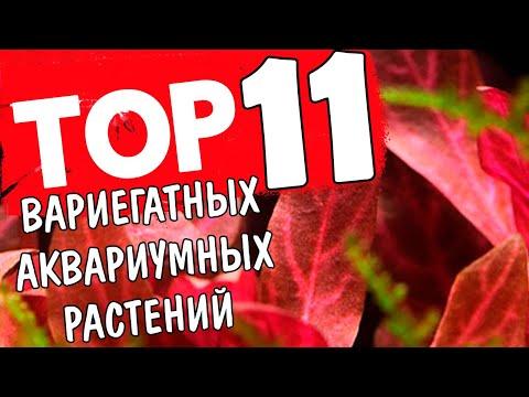 ТОП 11 ВАРИЕГАТНЫХ РАСТЕНИЙ