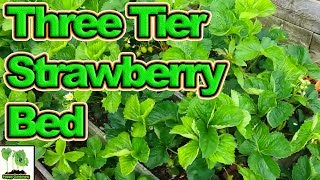 How To Build A Three Tier Strawberry Bed!