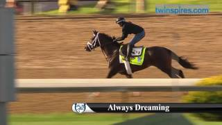 Always Dreaming 2017 Kentucky Derby Hopeful 4.27