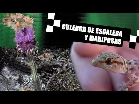 Frank de la Sierra - Cap. 7 - Culebra de escalera y mariposas