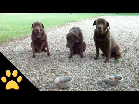 Polite Dogs Say Grace Before Dinner