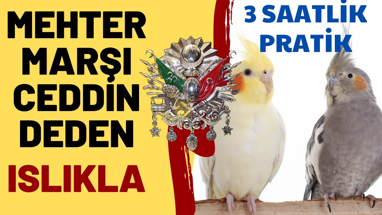 Papağan ıslık eğtimi | Sultan Papağan ıslık sesi | Türkiyem 1 saat (REKLAMSIZ)