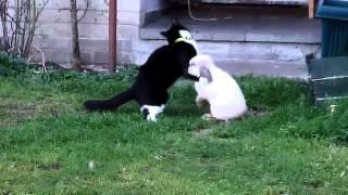 Кролик насилует кошку