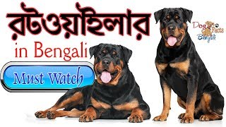Rottweiler Dog Facts in Bengali | Rott Dog Facts in Bengali | Dog Facts Bengali | Most popular dogs