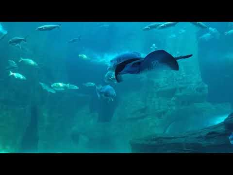 Two Oceans Aquarium Cape Town - April 2017