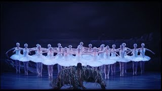 Swan Lake: the demands and rewards of being a swan | English National Ballet