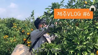 [제주살이VLOG] 김밥만 주면 열심히 일합니다