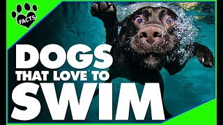 Top 10 Dogs That LOVE Water/To Swim