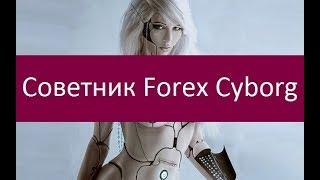 Советник Forex Cyborg. Особенности применения