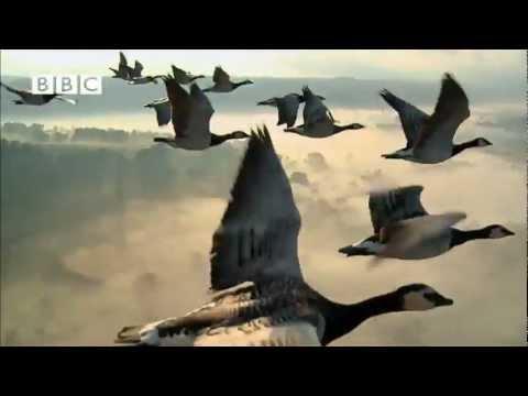 BBC's Earthflight - Trailer
