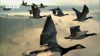 BBC's Earthflight - Trailer