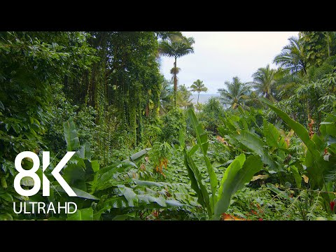 Incredible Jungle Sounds 8K - Exotic Birds Singing in Tropical Rainforest 8 HOURS - Part #1