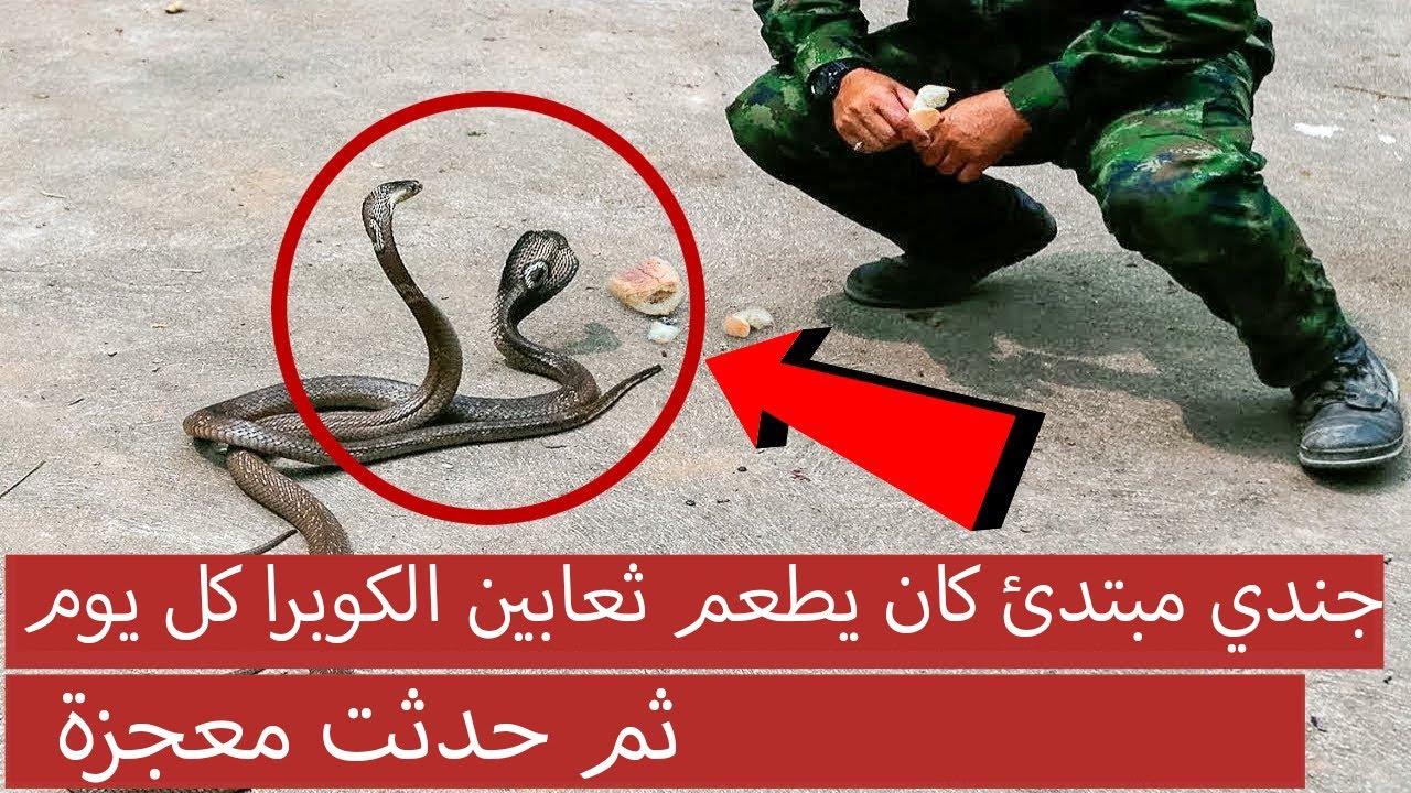 جندي مبتدئ كان يطعم ثعابين الكوبرا كل ، يوم ثم حدثت معجزة