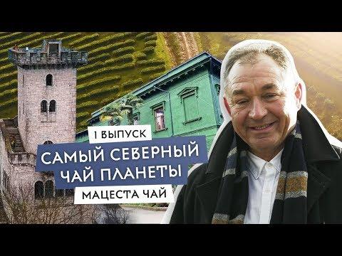Российский чай, которым можно гордиться! Братья Чебурашкины исследуют Cочи и чайные сады Мацесты
