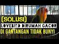 Solusi Lovebird Di Rumah Gacor Tapi Di Gantangan Tidak Mau Bunyi  Mp3 - Mp4 Download
