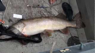Рыбалка на Енисее - мега щука(Щука поймана на енисее. Вес - куй знает сколько, длинна рыбы 125см., 2011-08-29T05:58:30.000Z)