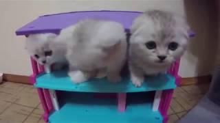 НОВЫЙ ДОМИК ДЛЯ КОТЯТ 😻 КОТЯТА ИГРАЮТ И БЕСЯТСЯ 🐱 Kitten Cat