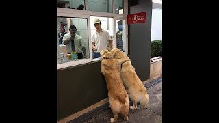 Funny and So Cute Dogs And Cats compilation 2019 #16 - FunnyAnimals