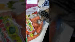Кошка и Морковка вторая серия Funny Cat and carrot part 2