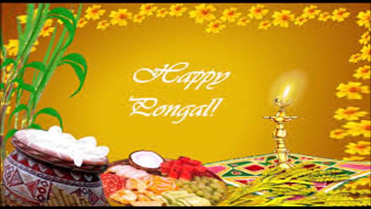 Happy Pongal 2018 Greetings Wishes Whatsapp Video E Card Hd