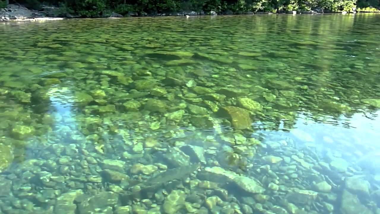 """Large """"Atlantic Salmon"""" in Crystal Clear Gaspe River - YouTube"""