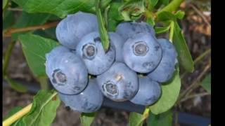 видео Плодовые деревья крупномеры купить в Украине
