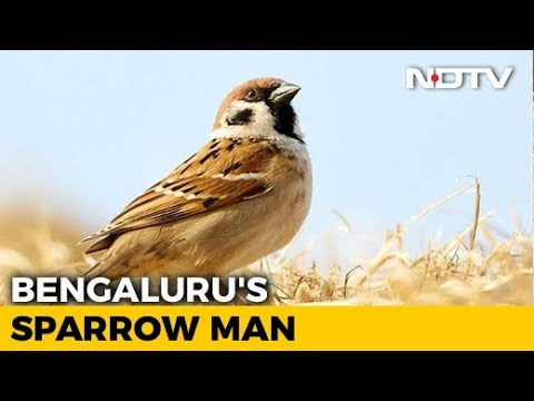 World Sparrow Day: Meet Bengaluru's 'Sparrow Man' Who's Saving House Sparrows From Extinction