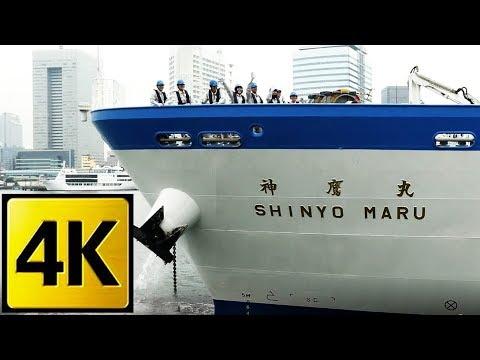 (Explore The Sea) Full ahead / A training vessel